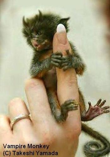 vampire-monkey.jpg
